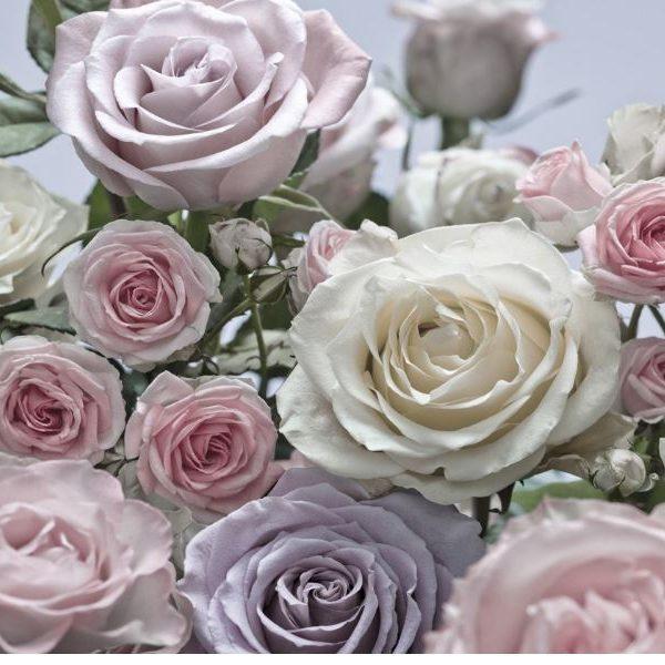 Fotobehang rozen pastelkleuren