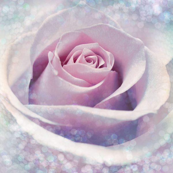 Fotobehang roos