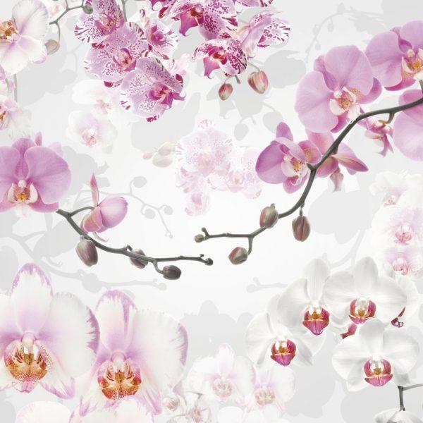 Fotobehang orichideen