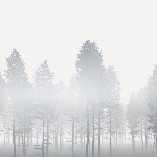Fotobehang bos in de mist