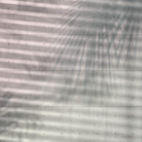 Fotobehang schaduw palmboom
